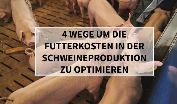 Blog_Teaser_Sano24_4_Wege_um_die_Futterkosten_in_der_Schweineproduktion_zu_optimieren