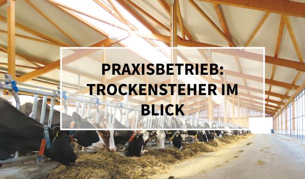 Sano24_Blog_Beitrag_Teaser_Praxisbetrieb_Trockensteher_im_Blick_Hof_Diera