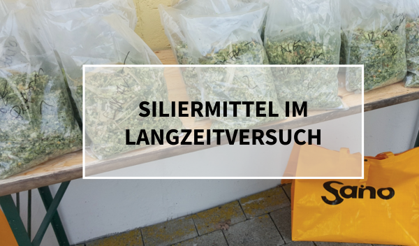 Sano24_Blog_Beitrag_Teaser_Siliermittel_im_Langzeitversuch