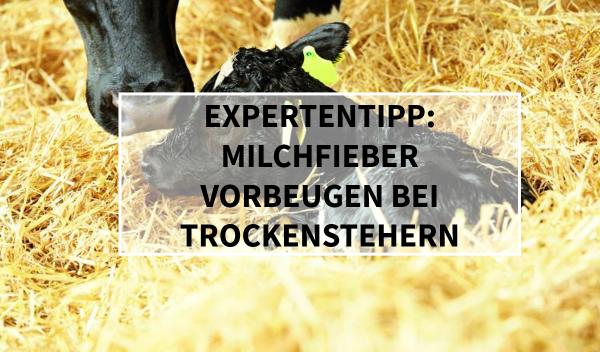 Sano24_Blog_Beitrag_Expertentipp_Milchfieber_Vorbeugen_bei_Trockenstehern