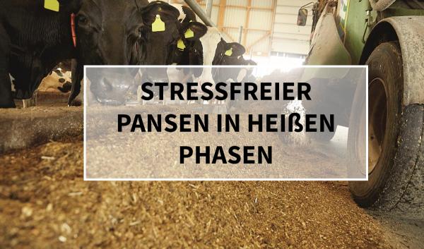 Sano24_Blog_Beitrag_Teaser_Stressfreier_Pansen_in_heissen_Phasen_Sanbuffer