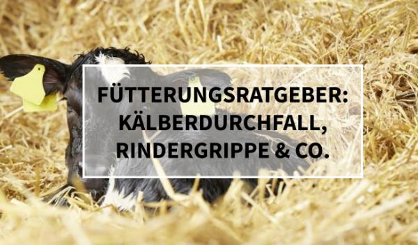 Sano24_Blog_Beitrag_Teaser_Ratgeber_K-lbererkrankungen_K-lberdurchfall_Rindergrippe