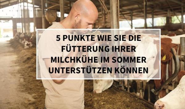 f-tterung_milchk-hre_sommer