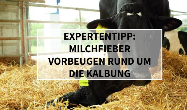 Sano24_Blog_Beitrag_Teaser_Expertentipp_Milchfieber_Vorbeugen_Kalbung