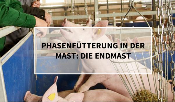 Phasenf-tterung_Endmast