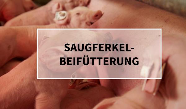 Sano24_Blog_Teaser_Saugferkelbeif-tterung_Sano