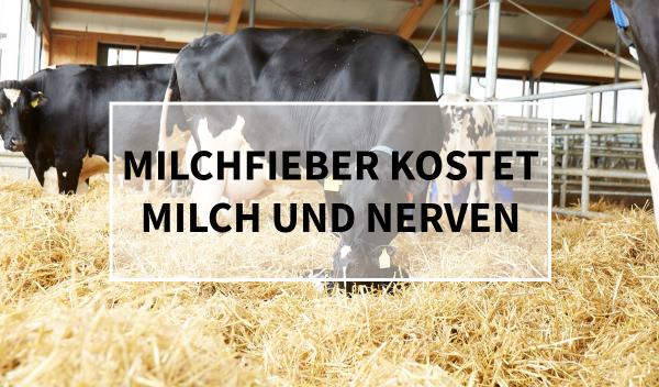 Sano24_Blog_Teaser_Milchfieber