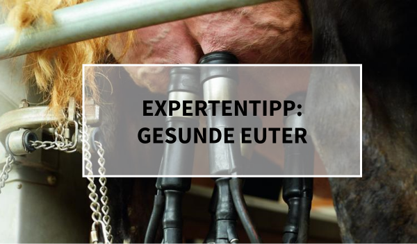 Sano24_Blog_Beitrag_Teaser_Expertentipp_Gesunde_Euter_K-he