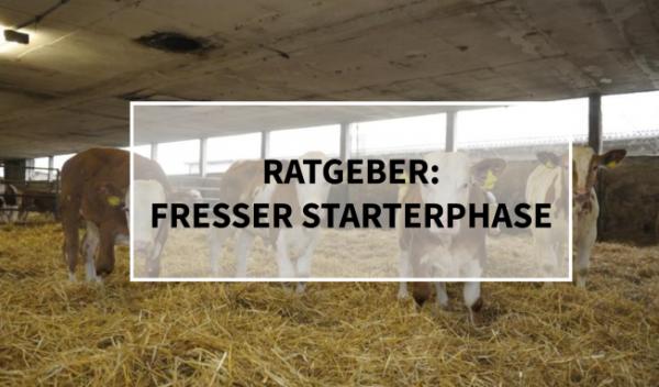 Sano24_Ratgeber_Fresser_Starterphase