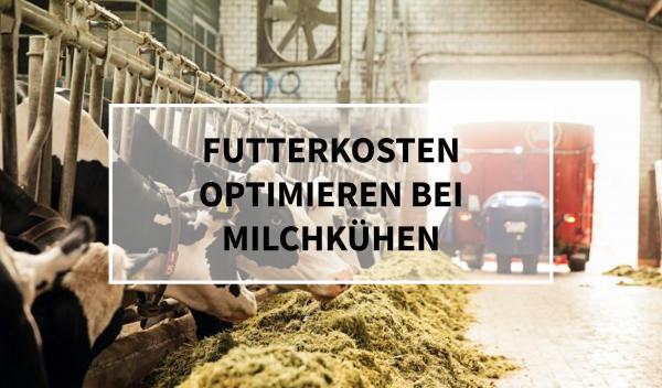 Sano24_Blog_Beitrag_Teaser_Futterkosten_optimieren_bei_Milchk-hen