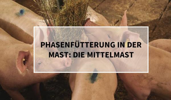 PHASENF-TTERUNG-IN-DER-MAST_DIE-MITTELMAST