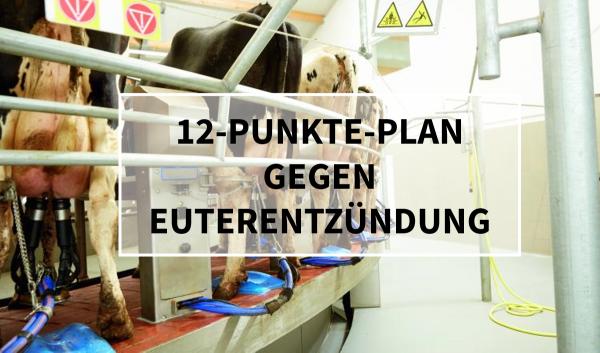 Sano24_Blog_Teaser_12-Punkte-Plan_gegen_Euterentz-ndung