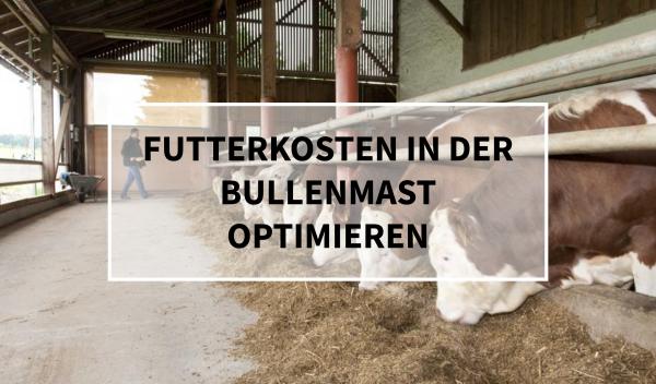 Sano24_Blog_Beitrag_Teaser_Futterkosten_in_der_bullenmast_optimieren
