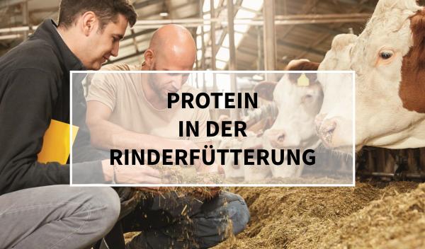 Sano24_Blog_Beitrag_Teaser_Protein_in_der_Rinderf-tterung