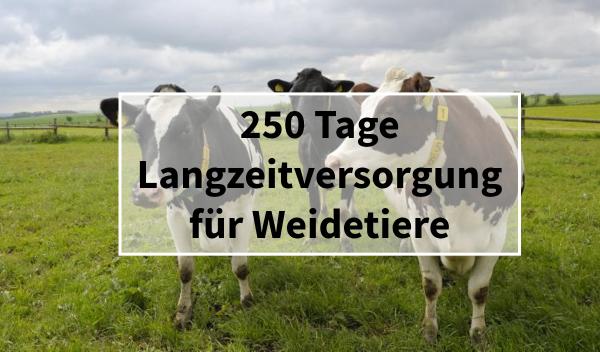 Sano24_Blog_Teaser_Weidetiere_Langzeitversorgung