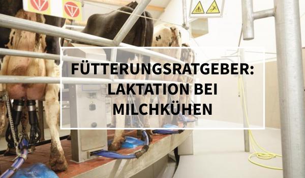 Sano24_Blog_Beitrag_Teaser_Laktation_bei_Milchk-hen