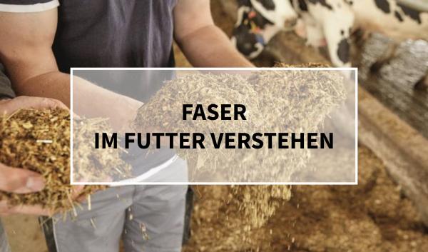 Sano24_Blog_Beitrag_Teaser_Faser_im_Futter_verstehen