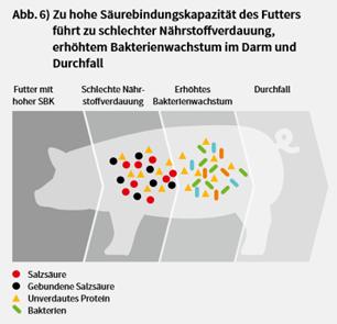 Sano24_Blog_Beitrag_Absetzphase_Ferkel_S-urebindungskapazit-t_N-hrstoffverdauung_Grafik