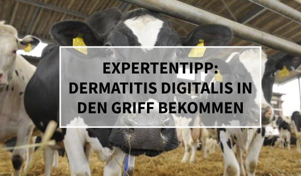 Sano24_Blog_Beitrag_Teaser_Dermatitis_Digitalis_in_den_Griff_bekommen