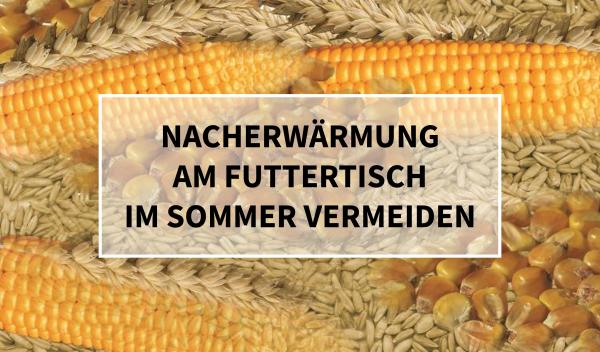 Sano24_Blog_Beitrag_Teaser_Nacherw-rmung_am_Futtertisch_im_Sommer_vermeiden