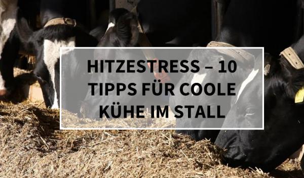 Hitzestress_Coole-Kuehe-im-STall9LQ188e1UvfWJ