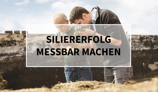 Sano24_Blog_Teaser_Siliererfolg