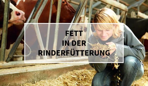 Sano24_Blog_Beitrag_Teaser_Fett_in_der_Rinderf-tterung